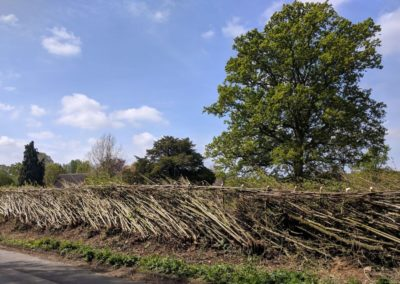 Midlands style hedge